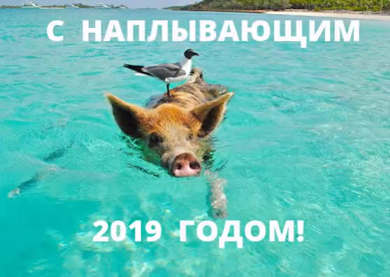 Watch and share С НОВЫМ 2018 ГОДОМ! (6) GIFs on Gfycat