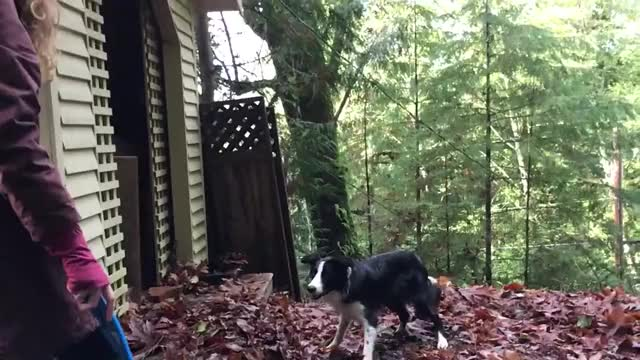 Watch and share Border Collie And Leaves In Slow Motion GIFs on Gfycat