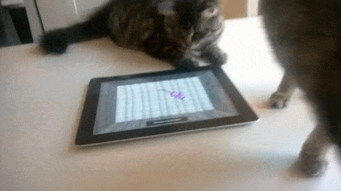 catgifs, Kitty playing on the iPad (reddit) GIFs