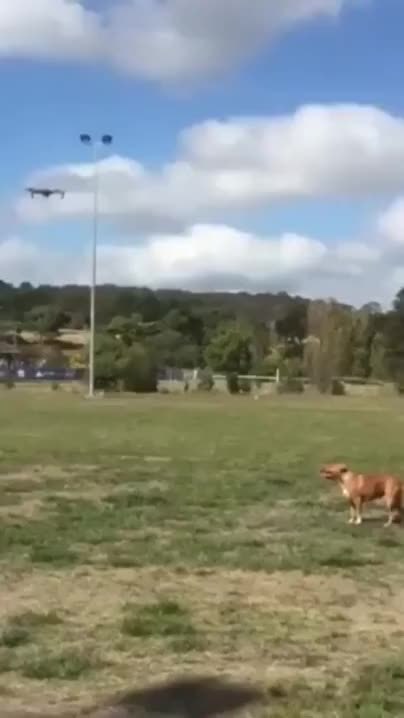 Watch and share There Are Two Types Of Dog In The World GIFs on Gfycat