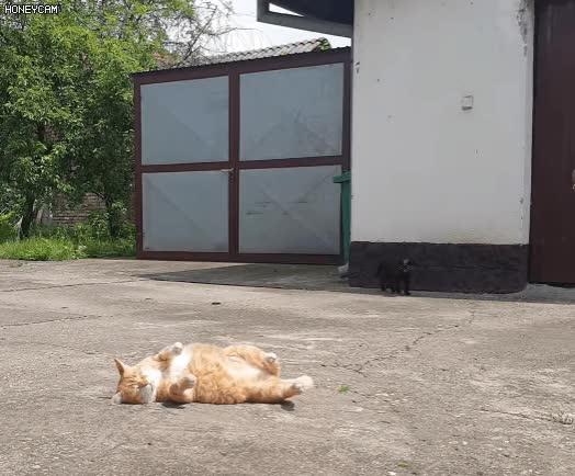 Watch and share 길거리에서 잠든 고양이 GIFs on Gfycat