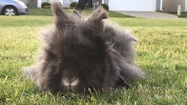 Watch and share Rabbits GIFs on Gfycat