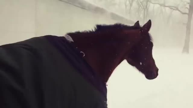 Watch Horses regret going outside in the snow - 980925 GIF on Gfycat. Discover more Viral, epic, video GIFs on Gfycat