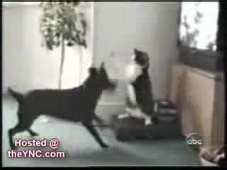 catslaps, коты, кошки, Смешные кошки и коты! GIFs