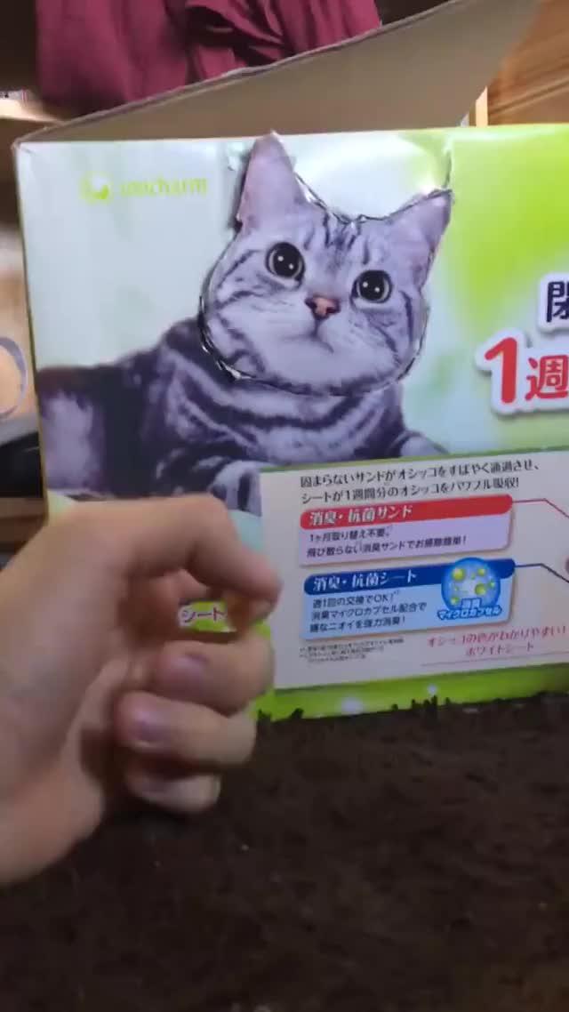 Watch RAWR!!! GIF on Gfycat. Discover more Aww, Cute, sil130 GIFs on Gfycat