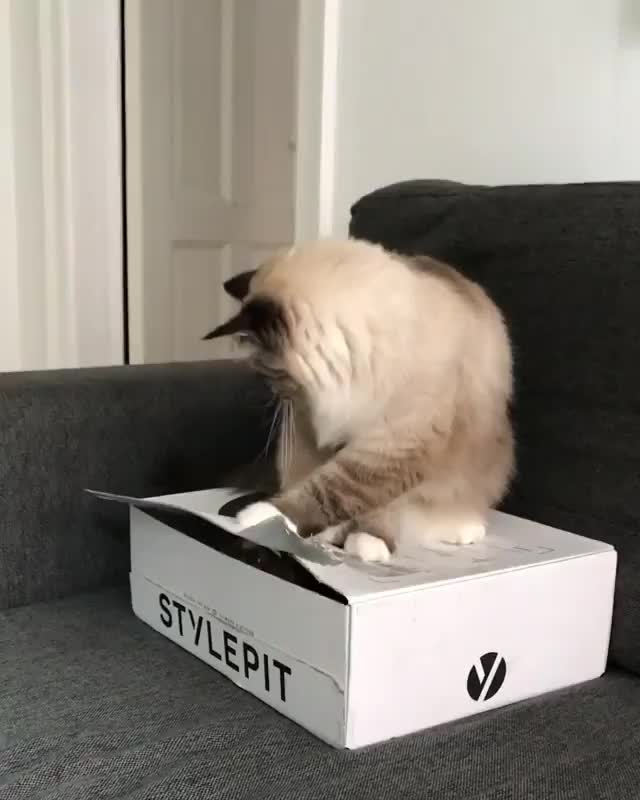 Watch and share Box Bully GIFs by RespectMyAuthoriteh on Gfycat