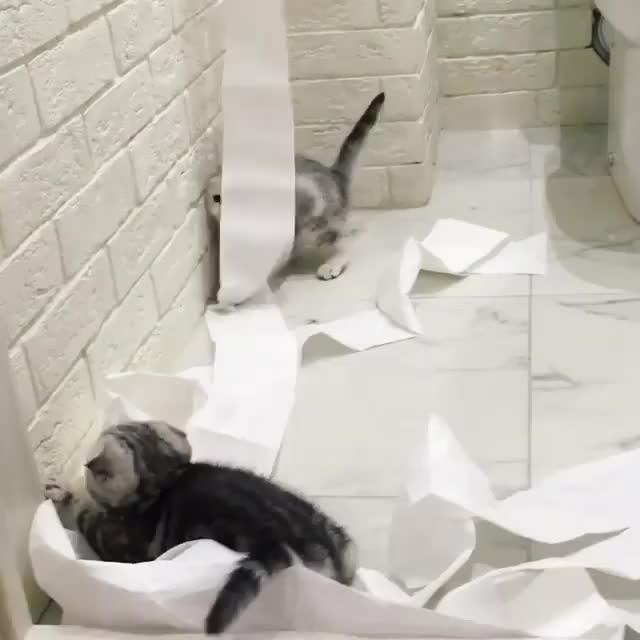 Watch and share Kittens GIFs by Koleandra on Gfycat