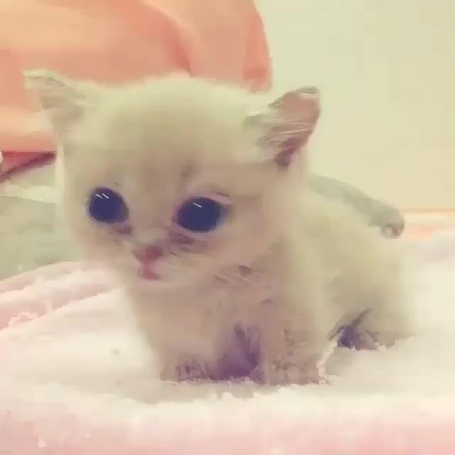 cute, eyebleach, kitten, Video by babyanmals GIFs