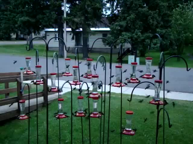 Watch Epic swarm of Hummingbirds GIF on Gfycat. Discover more daily, daily picks, gifs GIFs on Gfycat