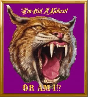 Watch and share Bobcat GIFs on Gfycat