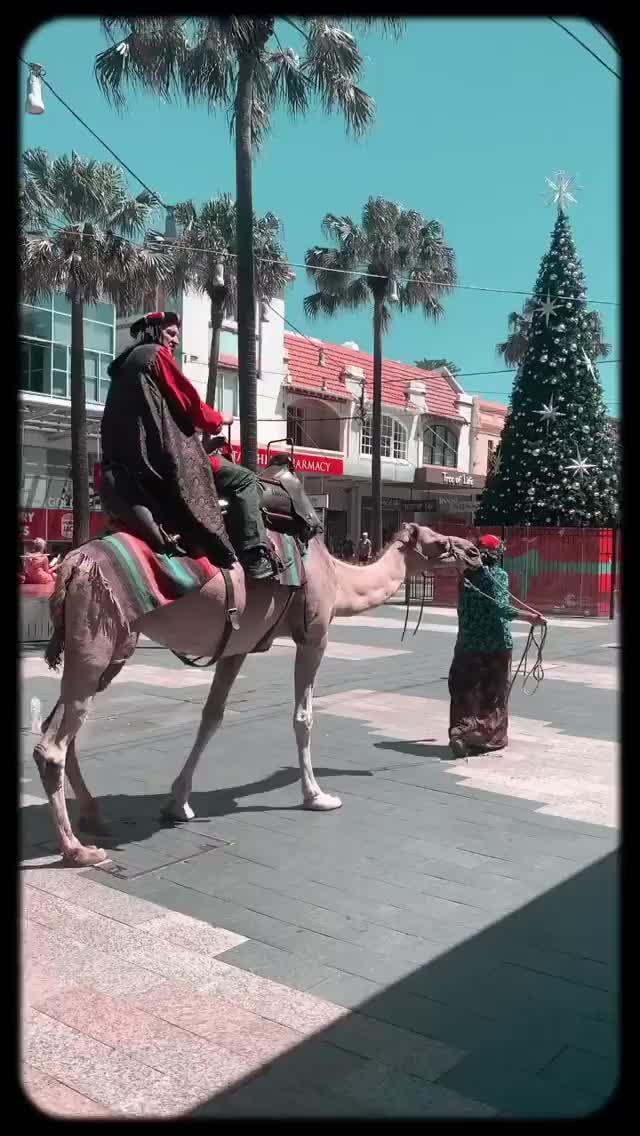 Watch marooshk 2018-12-25 06:07:48.285 GIF by Pams Fruit Jam (@pamsfruitjam) on Gfycat. Discover more related GIFs on Gfycat