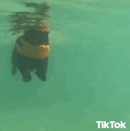 Watch and share Swimming GIFs and Nuota GIFs by TikTok Italia on Gfycat