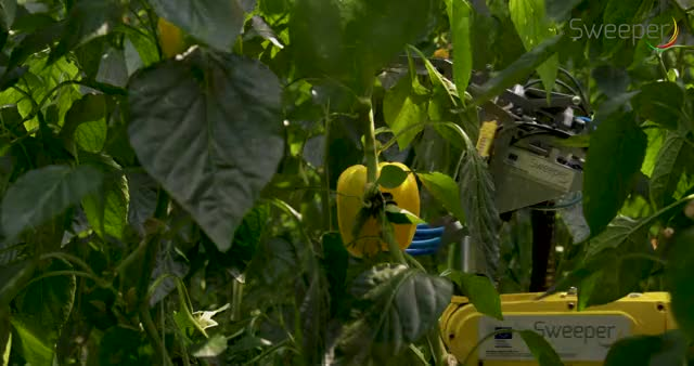 Watch This autonomous pepper picker GIF by @floppyseconds on Gfycat. Discover more related GIFs on Gfycat