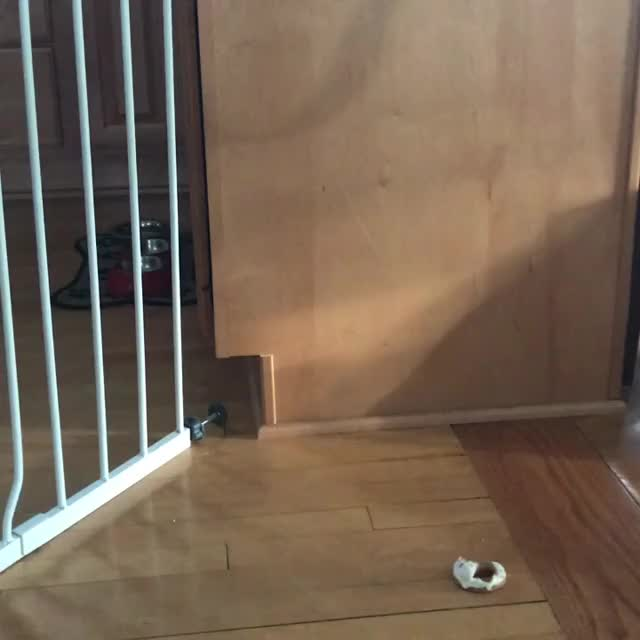 Watch and share Dog Escape Artist GIFs on Gfycat