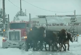 Watch and share Hardcore Amish Horse And Buggy Pulls Tanker Truck Out Of Snow GIFs on Gfycat