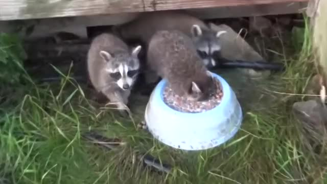 Watch and share Awwgifs GIFs on Gfycat