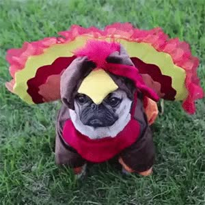 Watch and share Happy Thanksgiving GIFs and Turkey Day GIFs by Reactions on Gfycat