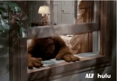 Watch Alf GIF on Gfycat. Discover more related GIFs on Gfycat