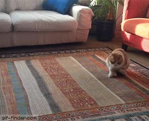 Watch and share Cat Drags Butt On Carpet GIFs on Gfycat
