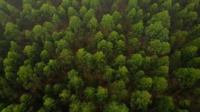 Watch and share FSC® – Florestas Para Todos Para Sempre GIFs on Gfycat