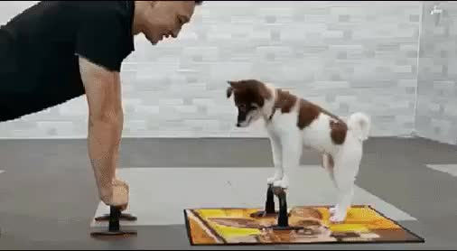 Watch and share Doggy GIFs and Game GIFs by zingtest on Gfycat