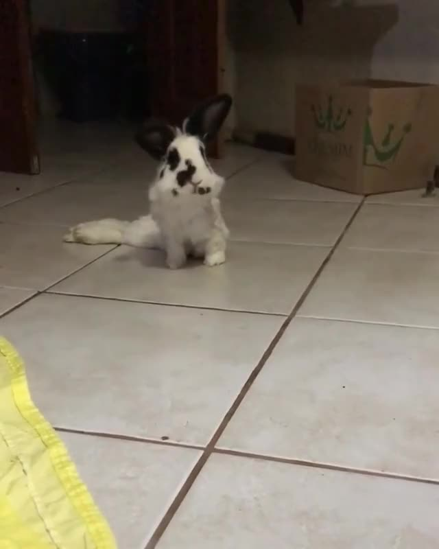 Watch and share Rabbitlover GIFs and Rabbitlife GIFs by cappincrunch on Gfycat