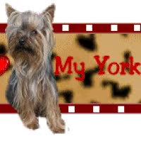 Watch and share Yorkie GIFs on Gfycat