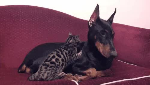 friend snugs : AnimalsBeingBros GIFs