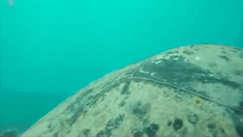 Watch and share Great Barrier Reef GIFs and Marine Biology GIFs on Gfycat