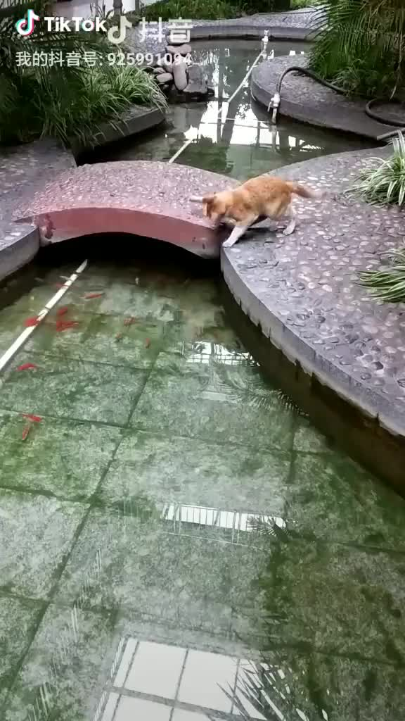 Watch and share Cat Got Fooled By Fish GIFs by bd on Gfycat