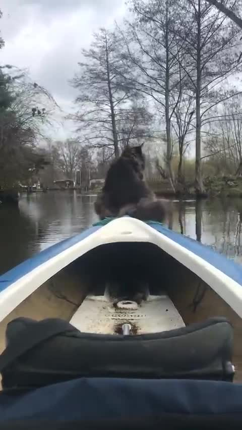 canoe, cat, relaxing, river, swan, German river traffic GIFs