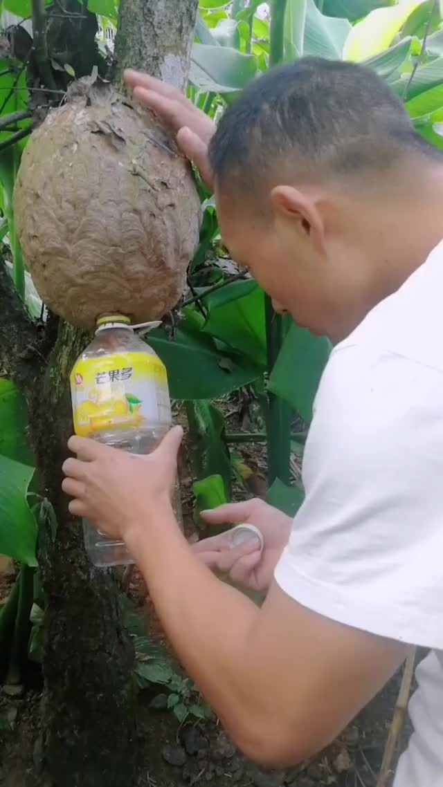 Watch and share Emptying A Wasp Nest GIFs by EngineerScientist on Gfycat
