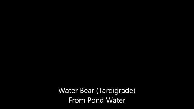 Watch and share Waterbear (Tardigrade) GIFs on Gfycat