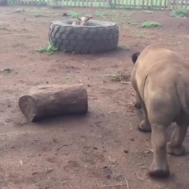 from zululand_rhino_orphanage GIFs