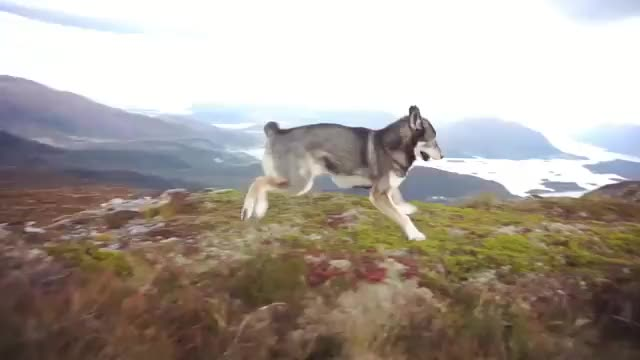 Watch and share Zoomies GIFs and Norway GIFs on Gfycat