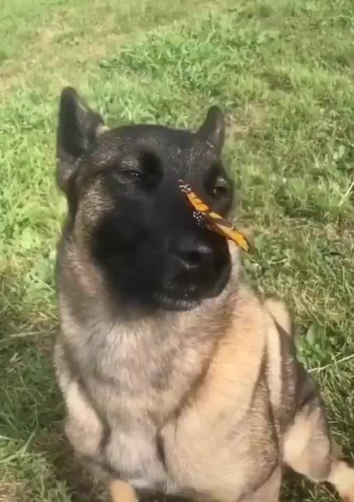 Watch and share Butterfly GIFs and Dog GIFs by GB on Gfycat