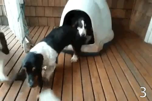 Watch Entertainment Tonight GIF on Gfycat. Discover more basset hounds, clown car of puppies, cutest surprise ever, igloo, puppies, they are multiplying GIFs on Gfycat