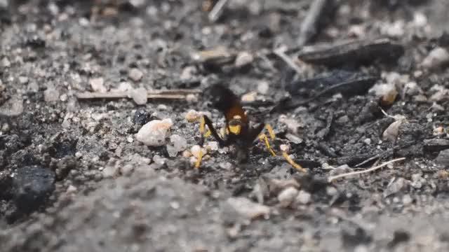 Watch and share Naturegifs GIFs and Insect GIFs by george_lass on Gfycat