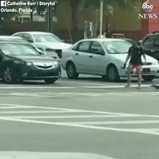 Watch Women+caught+on+camera+helping+an+alligator+cross+the+street+in+Orlando,+Florida.+-+Imgur GIF on Gfycat. Discover more related GIFs on Gfycat