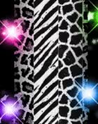 Watch and share Flashing Lights With Zebra Print.gif GIFs on Gfycat