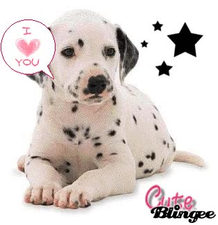 Watch and share Lil Dalmatian Puppy! GIFs on Gfycat