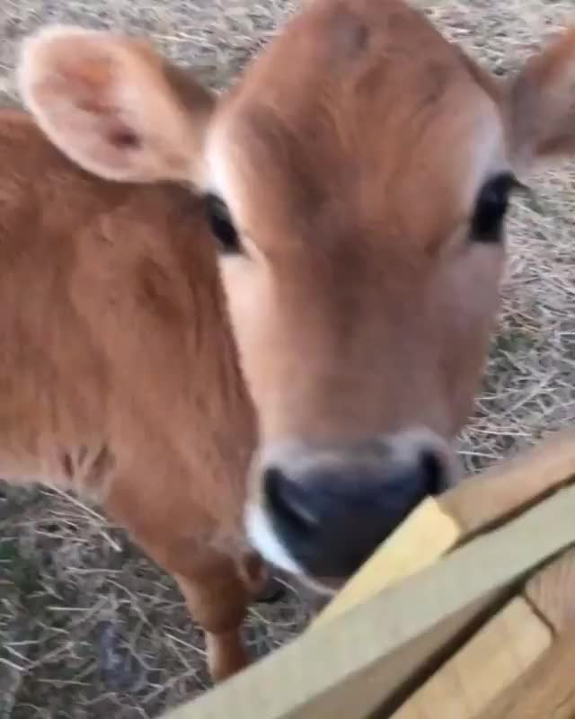 Watch and share Govegan GIFs by b12ftw on Gfycat
