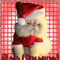 Watch and share BahHumbugCatSparkle GIFs on Gfycat