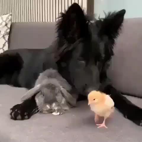 bird, bunny, dog, funny animals🐵, puppy, rabbit, 📷: @worldmeetmarley GIFs