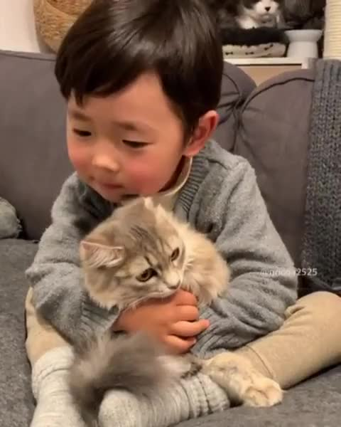 Watch and share Soft Kitty, Warm Kitty GIFs by natsdorf on Gfycat