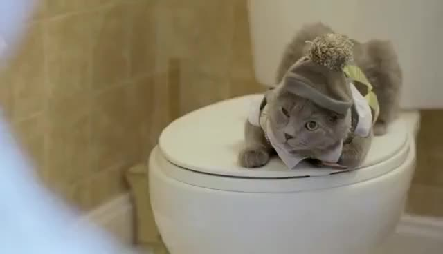 Watch Litter Box Rescue - Cat Reality TV (Gordon Ramsey Parody) GIF on Gfycat. Discover more related GIFs on Gfycat