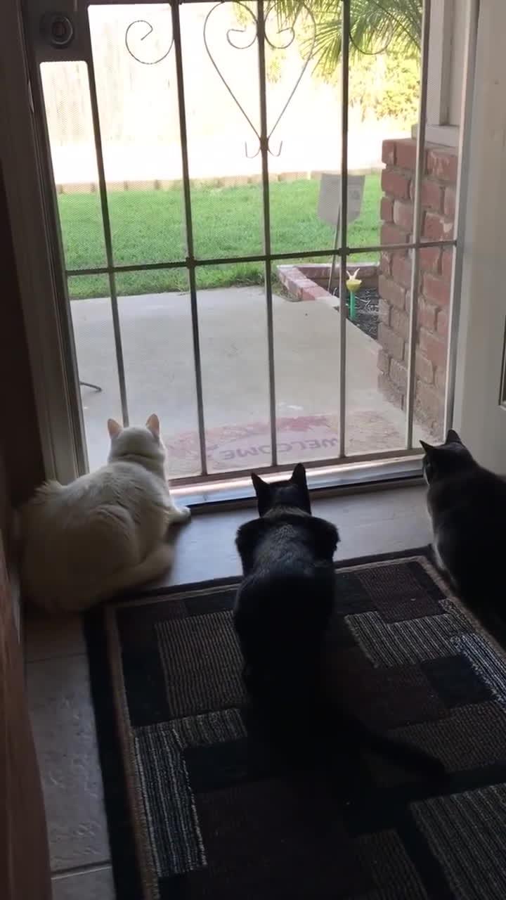 likeus, Scaredy cats GIFs