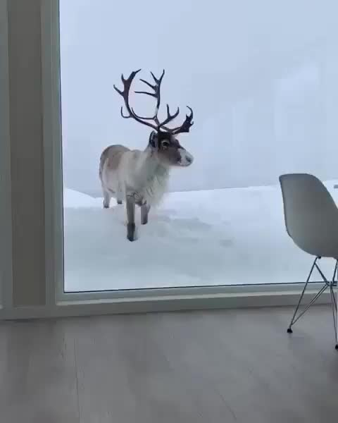 Watch and share Nature GIFs by vani  on Gfycat