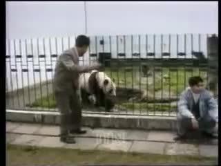 hitmanimals, Panda Attacks Tourist (reddit) GIFs