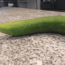 Watch Turtle Cucumber GIF on Gfycat. Discover more related GIFs on Gfycat